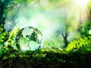 Felmérés: a többség drágábban is megvenné a környezetbarát termékeket