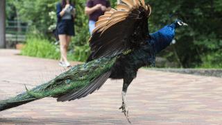 Átadták a Nyíregyházi Állatpark ökológiai tanösvényét