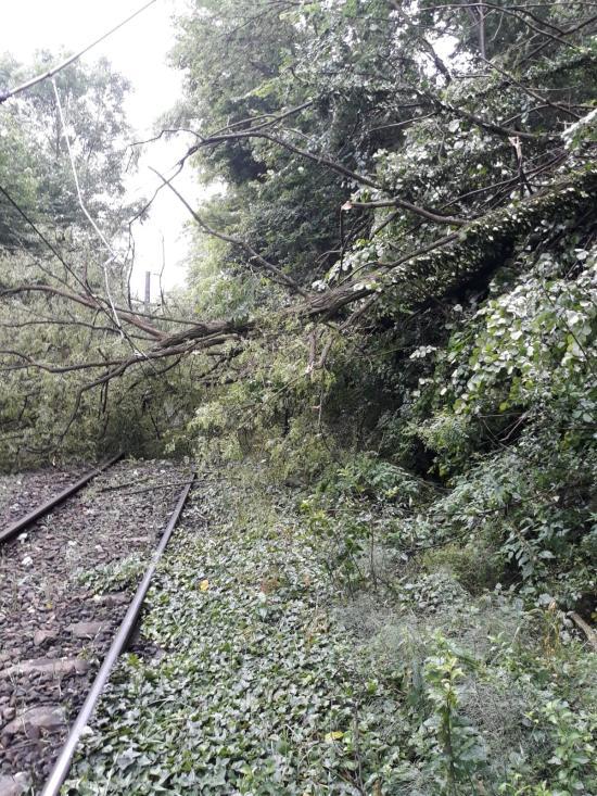 Fennakadások a vasúti közlekedésben a sínekre és villamosvezetékekre dőlt fák miatt