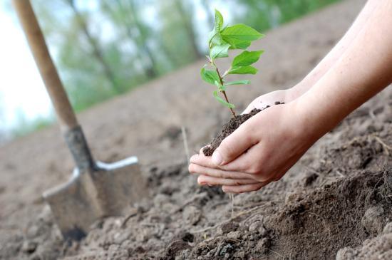 Ki emelné alkotmányos rangra a klímavédelmet?