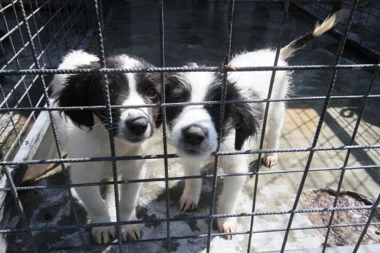 Egyre romlik az elhagyott kutyusok helyzete Kolozsváron (VIDEÓ- és FOTÓRIPORT)