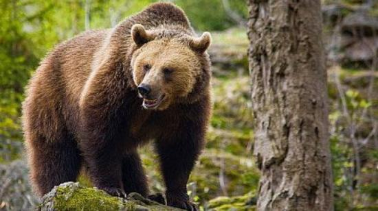 Sátorozó kanadai turistára támadt egy medve Azugán
