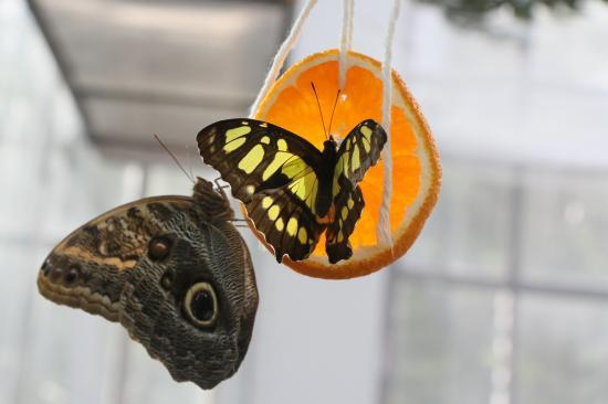 Lepkék a levegőben: szépség és veszélyeztetettség
