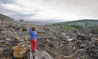 Illegális erdőirtás a Radnai-havasokban