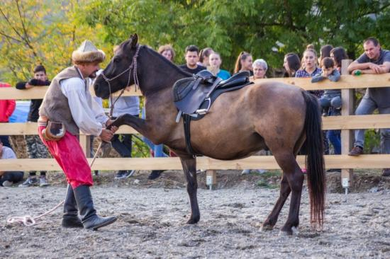 Tékarám lovasudvar: újabb megvalósult álom