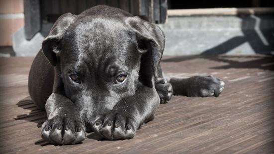 Miért félnek a kutyák?
