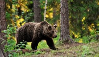 Medvetámadás az esztenán