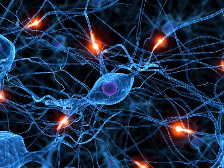 Emberszabásúak agyi fejlődését hasonlították össze. Az emberi agy a leglassúbb