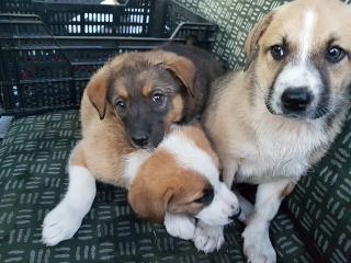 Örökbe kell(ene) fogadni a Țermure-menhely kutyáit