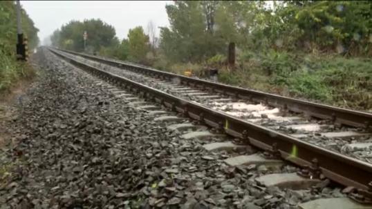 Medvebocsokat gázolt halálra a vonat