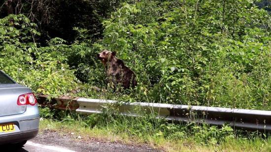 Saját háza udvarán támadt egy férfire egy medve Hidegkúton