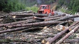 Iohannis: Véget kell vetni az illegális fakitermelésnek