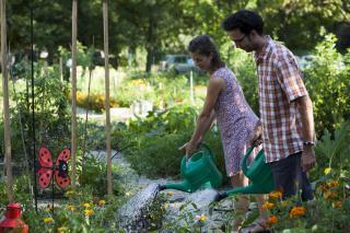 Amikor kinő a zöld a tetőn: közösségi kertek Kolozsváron