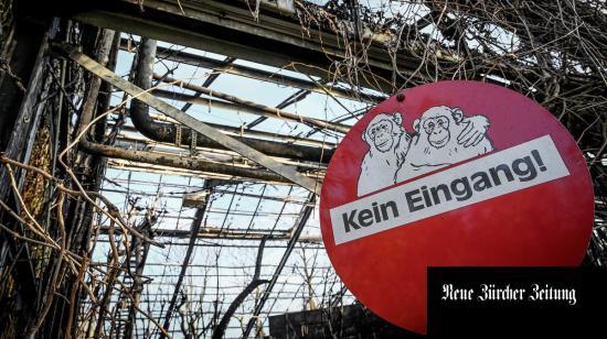 Kívánságlámpás okozhatta a németországi állatkerti majomház leégését