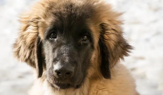 Harminc nap előzetes a kutya elpusztításával gyanúsított férfinak