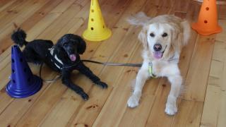Gyógyító állatok: amikor a kutya több társnál, barátnál