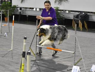Legszebb, legügyesebb kutyák versenye