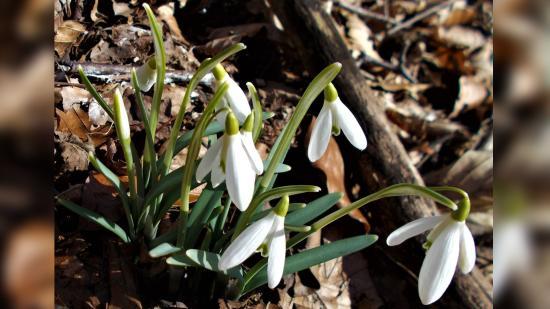 Tavaszvárás február harmincadikával