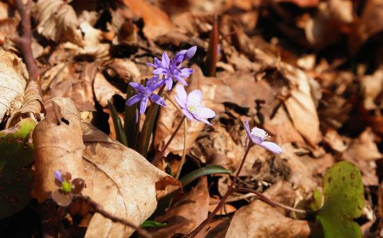 Tavaszi séta az erdőben