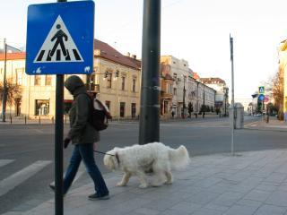 A gazdi sétáltatja a kutyát, vagy fordítva?