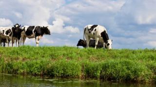 Online igényelhető az agrártámogatás