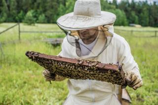 Nyolcadik katonai rendelet: nőtt a méhészek, halászok és őstermelők mobilitása