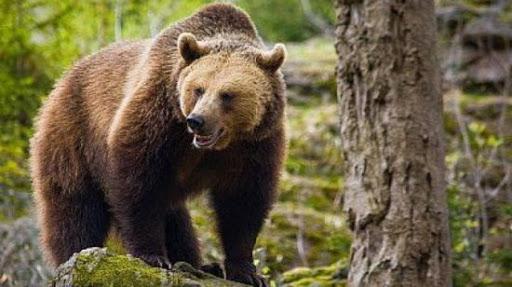Medve jelent meg Vaslábon