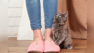 Élet a lakásban a macskával: mítosz és valóság