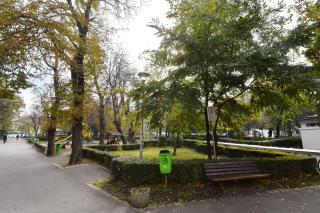Kivágják a román színház körüli fák egy részét?