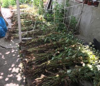 Vadkender- termesztők rendőrkézen
