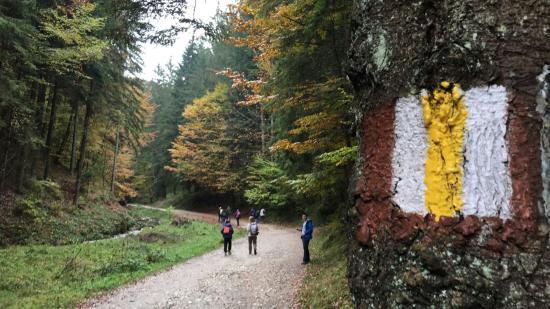 Lengyel-szlovák-erdélyi természetjárók Erasmus+ kalandjai az EKE háza táján