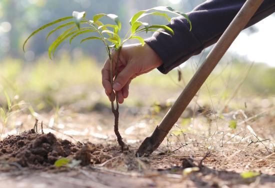 Erdő hónapja Szamosújvár környékén