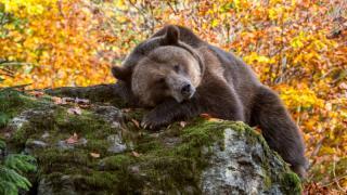 Medvét gázolt egy személygépkocsi Ördöngösfüzesen