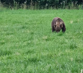 Tánczos Barna is találkozott medvével