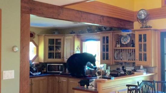 Bement a medve a konyhába