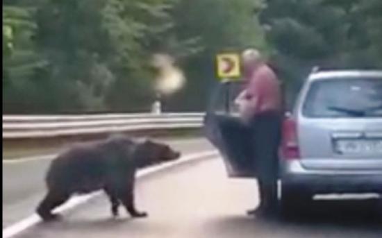 Tánczos Barna: ezentúl szigorúbban büntetik a medvék etetését