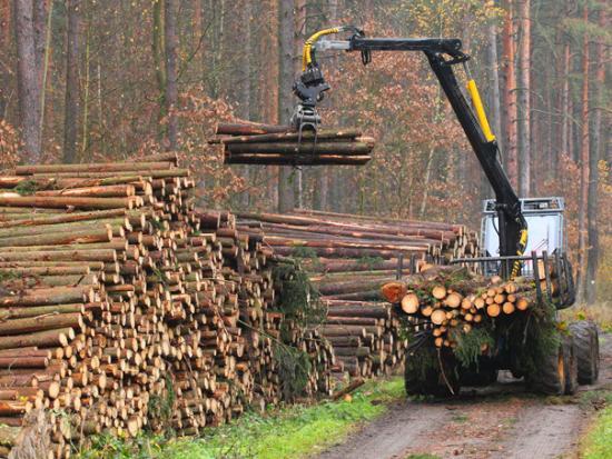 Hány felhasználója van a faanyagot nyomon követő rendszernek?