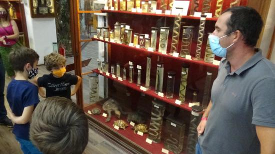 VIDEÓ – KMN – Tárlatvezetés az Állattani Múzeumban
