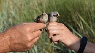 Amikor – és ahol – madarat lehet fogatni az emberrel